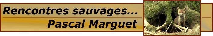 logo du site de Pascal MARGUET