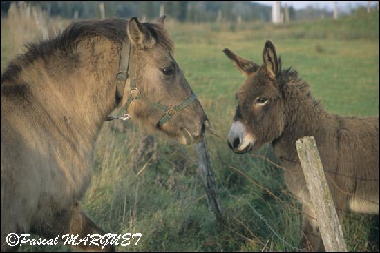 Site de rencontre pour amoureux des chevaux